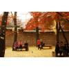Địa điểm chụp ảnh mùa thu đẹp ở Hàn Quốc