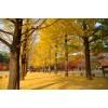 Cơ hội khám phá mùa thu Hàn Quốc